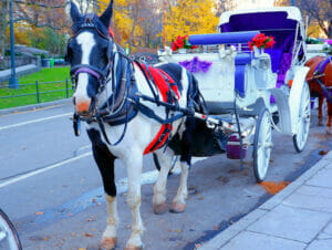 Eine Kutschenfahrt durch den Central Park