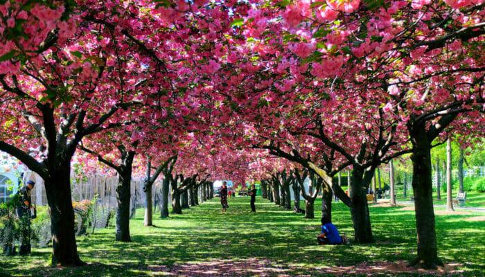 Wetter in New York - Frühling
