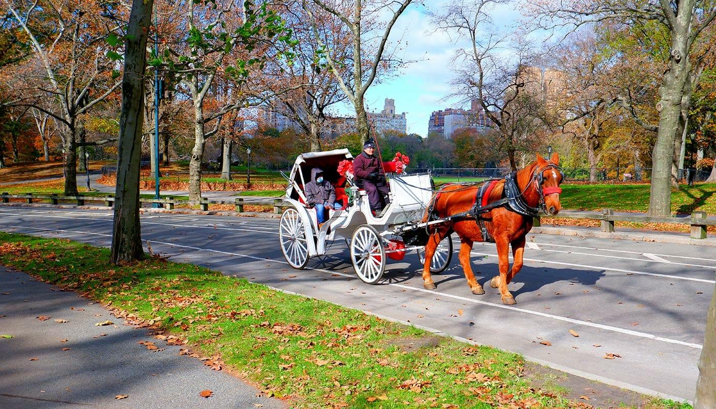 Kutschenfahrt im Central Park