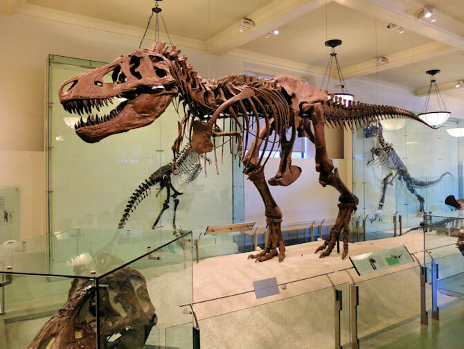 American Museum of Natural History in New York - Dinosaurier