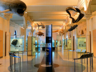 American Museum of Natural History in New York - VIP Tour