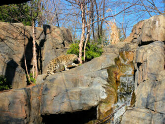 Central Park Zoo Tickets - Schneeleopard