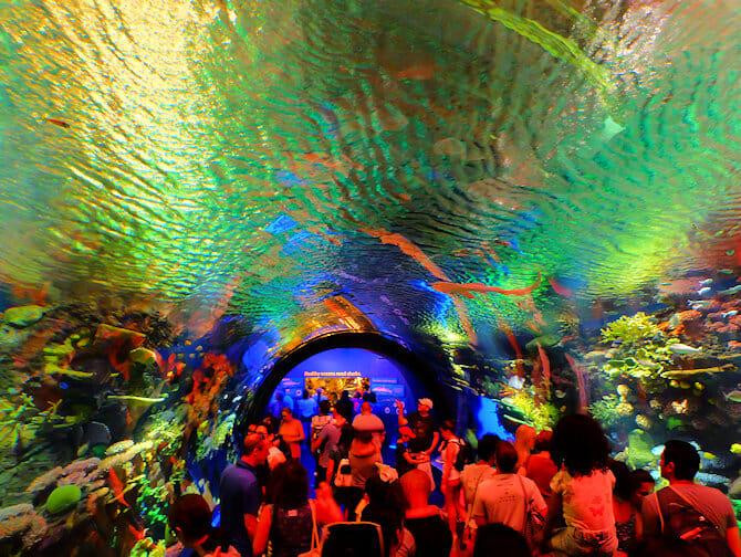 New York Aquarium - Korallenriff