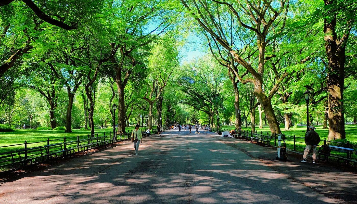 Muttertag in New York - Allee durch den Central Park